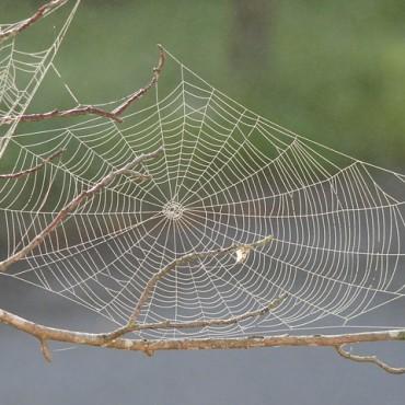 spider-web-617754_640